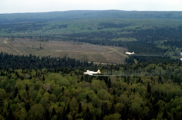 Figure 2. TBMs #12 FMUD and #20 GLEH spraying over woodland, 1987. The cleared area is a recently harvested block.